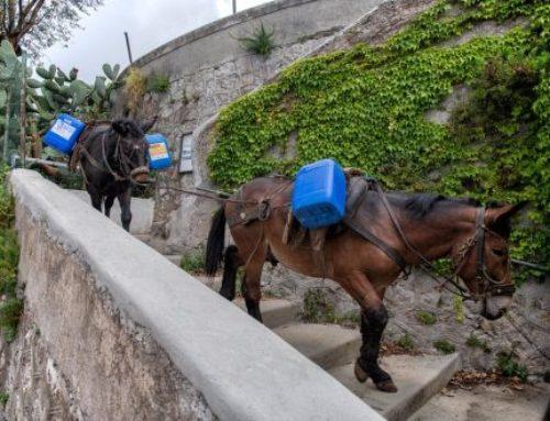 Ad Amalfi il folklore batte la modernità: la sanificazione si fa con i ciucciarielli